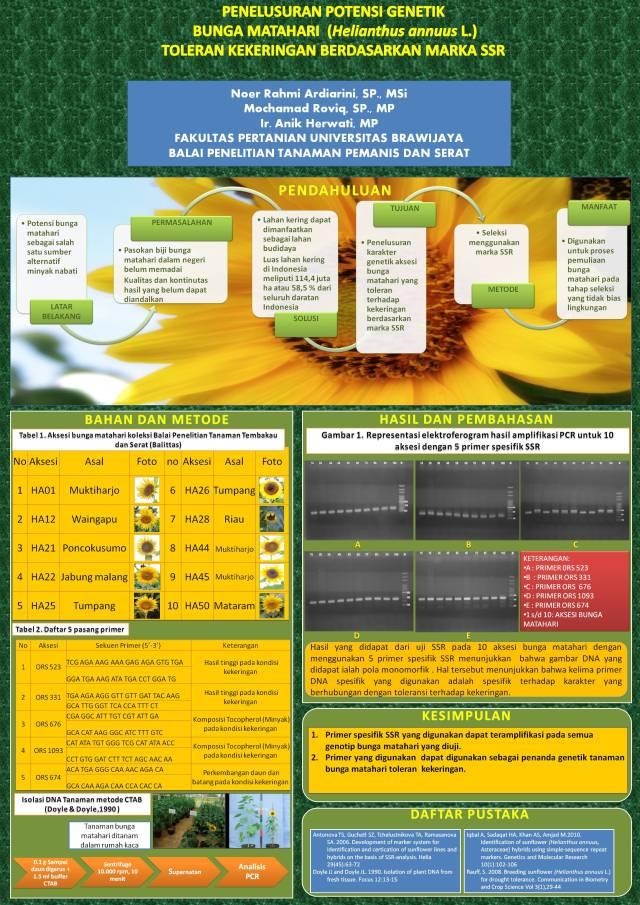 Mini Poster - NR Ardiarini - Bunga Matahari-analisis SSR-dan toleransi stres